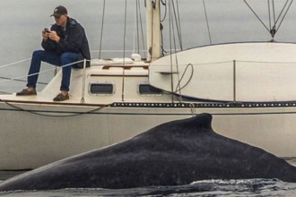 Don't Be The Whale Watch Guy